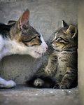 You Talkin' to Me? by *ZoranPhoto on deviantART