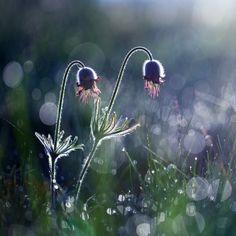 Morning Dew III by Martin Rak