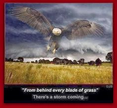 #NTB: From behind every blade of grass...