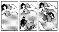 Bed time for the cat lady I Love Cats, Cute Cats, Funny Cats, Crazy Cat Lady, Crazy Cats, Neko, Japanese Animated Movies, Sleepy, Cat Boarding