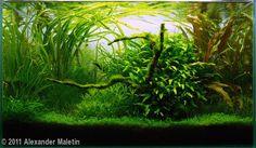 2011 AGA Aquascaping Contest - Entry #131