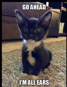 These adorable kittens will warm your heart. Cats are wonderful companions. Funny Animal Memes, Cute Funny Animals, Funny Animal Pictures, Cute Baby Animals, Funny Cats, Funny Memes, Funniest Animals, Animal Funnies, Funniest Memes
