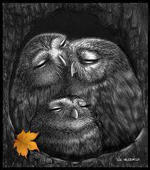 Owl Drawings - Familia by Miki Krenelka