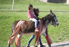 One of the cute 'donkeys in trousers' on  Île-de-Ré in the Charente Maritime, pictured giving rides to children during the summer. This breed is known as the Poitou donkey once deemed a status symbol by French nobles centuries ago.