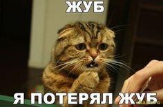 Бойцовский котик потерял зубик