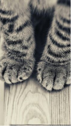Love me some cat paws