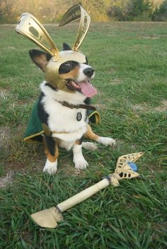 For Halloween Murray is going as Loki, the villain from the movie The Avengers. My very creative boyfriend crafted his whole costume, including a staff that lights up and is made of a dog bone.