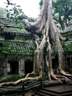 Los lugares abandonados más increíbles del mundo - Ta Prohm, en Camboya                                                                                                                                                      Más