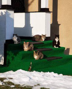A Feral Cat Grows in Brooklyn | Broadly