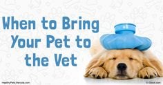 Pets are masters at hiding symptoms of illness, so if your pet is showing signs…