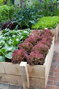 Vegetable Garden - would love to do this one day