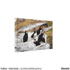 Puffins - little birds big leinwanddruck Little Birds, Ireland, Polaroid Film, Big, Painting, Vacation Pictures, Animal Themes, Artworks, Canvas