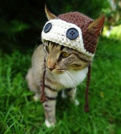 Artist Crochets Pet Hats And They're Purrfect | Bored Panda