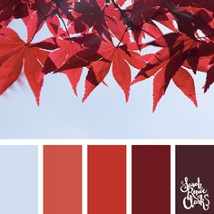 Red autumn leaves - color Inspiration | Click for more color combinations and color palettes inspired by the Pantone Fall 2017 Color Trends, plus other coloring inspiration at http://sarahrenaeclark.com | Colour palettes, colour schemes, color therapy, mood board, color hue