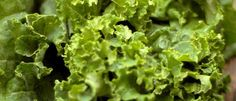 Kale Leaves, Important Facts You Should Know