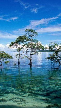 Havelock Island, Andaman and Nicobar Islands.