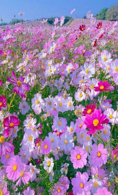 Wonderful Pictures flower garden aesthetic Concepts Best wishes! You decide to begin an organic and natural trim floral backyard (or almost any garden)! Amazing Flowers, Pretty Flowers, Purple Flowers, Beautiful Landscapes, Beautiful Gardens, Beautiful Things, Wild Flower Meadow, Cosmos Flowers, Field Of Flowers