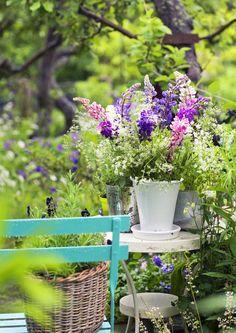Kimput ja asetelmat tuovat kesän tuoksut ja värit kotiin. Puutarhakasveihin yhdistelemällä luonnonkukkakimppu sopii koristamaan arkea tai juhlaa. Lue lisää Viherpihasta!