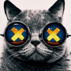 Admiral's GIFs - Motion Graphics & Creative Coding: When I see Cats following me on Tumblr / Goggle...