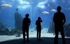 Aquarium, Lissabon