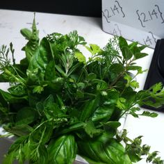 Basil, mint and cilantro from our garden!