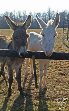 Doodle and Frost ♡ ~Long-Ears Forever Farm 2015