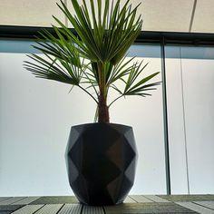 Vase, Home Decor, Plants, Projects, Decoration Home, Room Decor, Jars, Vases, Interior Decorating