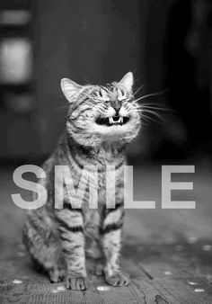 #Cat #cute SMILE-my mom ALWAYS told me to smile at mean people, because mean people are mean and are unhappy with who they are.:P <3 ---and we both deal with the public.  a Lesson for many of us to learn ^_^<3