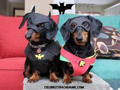 Batdog y Robin salvan el día
