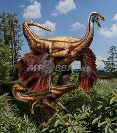 7500万年前のカナダに生息していた羽毛恐竜「オルニトミムス」。米映画『ジュラシック・パーク(Jurassic Park)』ではうろこに覆われた恐竜として描かれたが、最近見つかった化石から、羽毛や翼を持っていたことが分かった(2012年10月25日提供)。(c)AFP/UNiversity of Calgary/Julius Csotonyi ▼16Jul2014AFP 【特集】古代生物図鑑 http://www.afpbb.com/articles/-/3002031