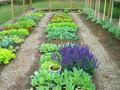 beautiful vegetable gardens | Vegetable garden...June 1, 2010