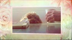 Luvfurever.com Online pet supply #dog leashes #dog collars #dog walk #coffee Online Pet Supplies, Dog Collars, My Coffee, Pets, My Coffee Shop, Animals And Pets