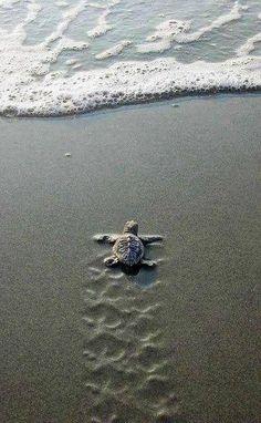 Cute baby sea turtle