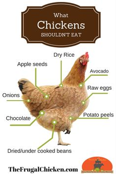 List of food that's poisonous for chickens to eat. Keep handy for reference.