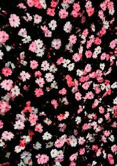 Fondos de flores margaritas tumblr - Imagui