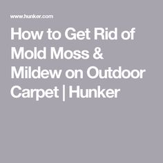 How to Get Rid of Mold Moss & Mildew on Outdoor Carpet Outdoor Carpet, Get Rid Of Mold, Remove Mold, How To Kill Mold, Cleaning Mold, Removing Carpet, What To Use, Mold And Mildew, Boden