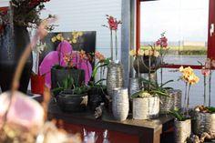 Orchideeënkwekerij de Molenhoek Bemmel