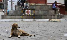 Pelo texto, os animais não podem ser tratados como coisas. (Foto: Rodrigo Clemente)
