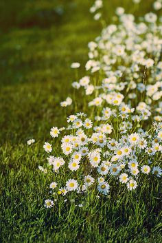 Mowed around. by glass_pieces, via Flickr