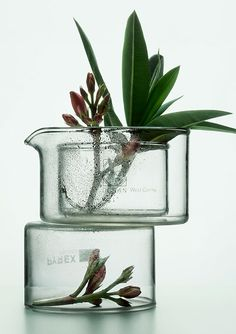Peter Lippmann - love this ... stacked glass, small branch cutting with leaves and a rhode. bud