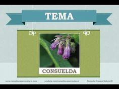 Beneficios, nutrientes y propiedades de la consuelda. Más información en: http://www.remediocaseronatural.com/comidas-sanas-beneficios-consuelda.htm