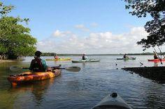 Happy Hour Kayak Tour in Sarasota - TripAdvisor