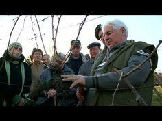 A szőlő metszése január végén, február elején aktuális. Gardening, Youtube, Lawn And Garden, Youtubers, Youtube Movies, Horticulture