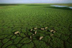 15Espectaculares fotos avista depájaro, Parque Nacional «Amboseli», Kenia