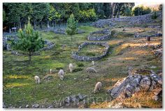Citânia de Santa Luzia | Flickr - Photo Sharing! Portugal