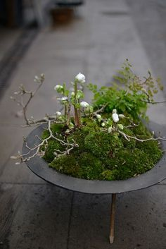 Advent on (Victoria Skoglund) - # Check more at pflanzen. - Advent on (Victoria Skoglund) – # Check more at pflanzen.frisurde… Advent on (Victoria Skoglund) – # Check more at pflanzen. Diy Planters, Garden Planters, Decoration Plante, Pot Plante, Parts Of A Plant, Garden Terrarium, Container Flowers, Gardening For Beginners, Amazing Gardens