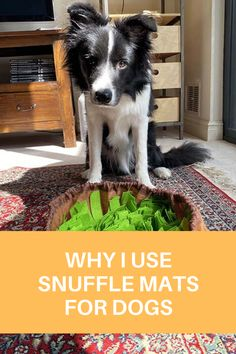A snuffle mat is an interactive enrichment puzzle that will engage your dog's mind and body. Dog Enrichment, Enrichment Activities, Dog Treat Dispenser, Dog Puzzles, Interactive Dog Toys, Dog Feeding, Ruin, Stress Relief, Dog Treats