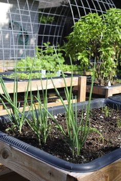 Grow Cover Crops For The Best Garden Soil Gardens C And Dutch