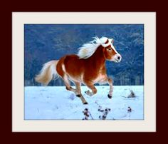 Love these animals.  Horses are such beautiful creatures.  Click on pin for Pinterest tips.