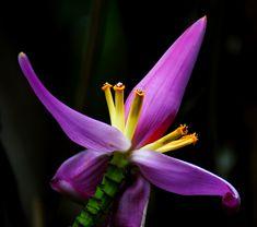 Tropical Flower #Hawaii